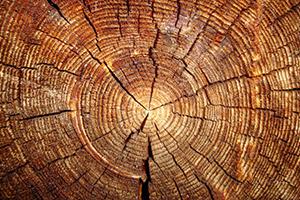 protettivo naotecnologico per legno grezzo e verniciato